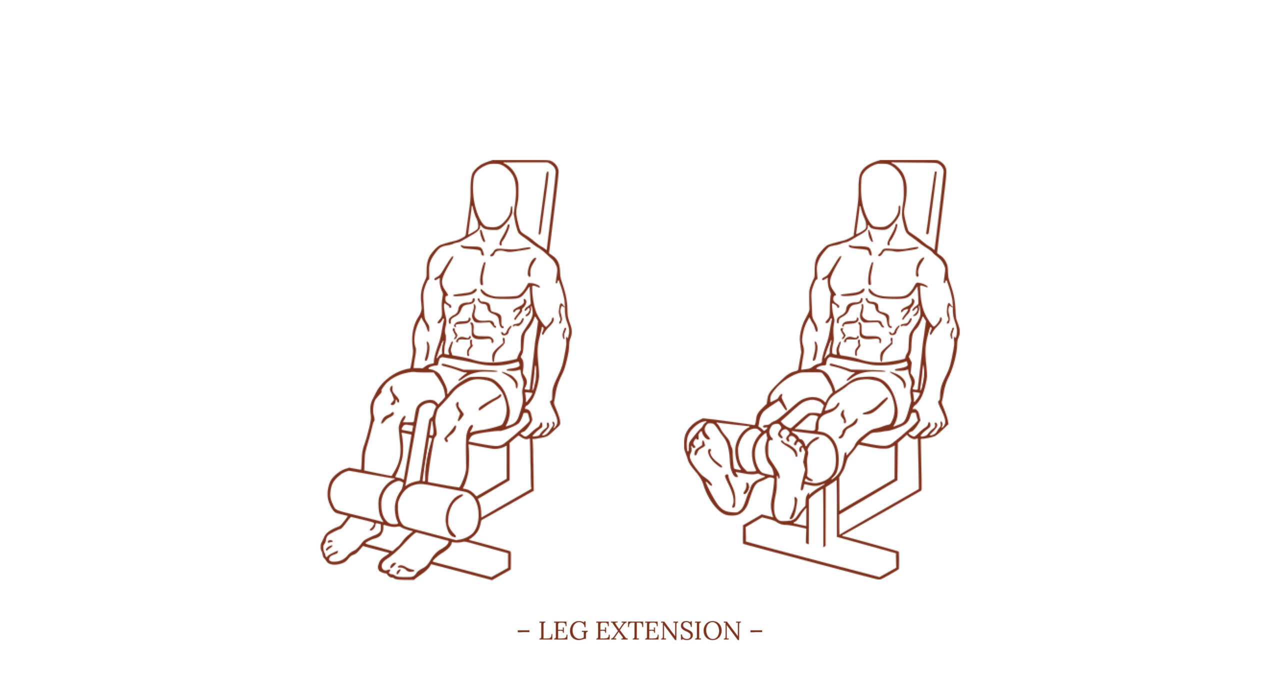 Leg Extension Illustration