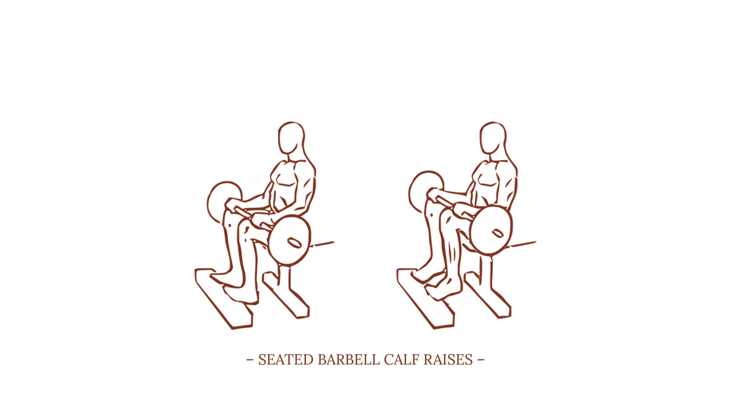 Seated barbell Calf Raises Illustration