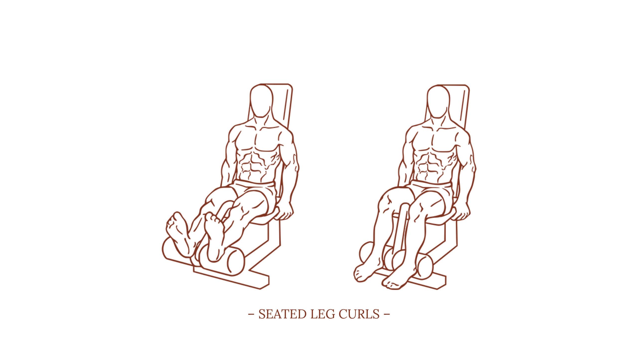 Seated Leg Curls Illustration