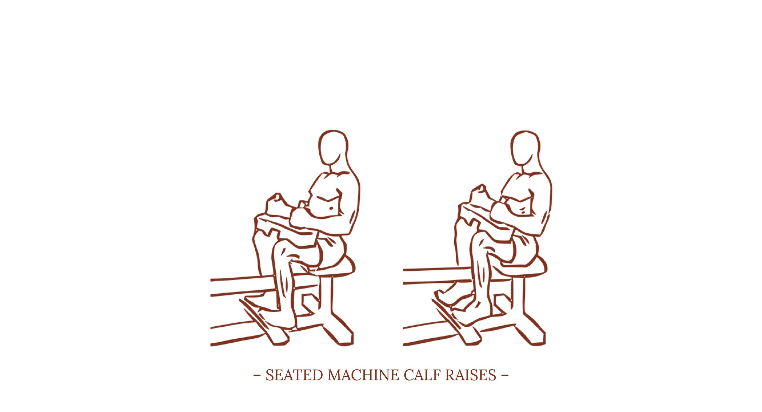 Seated Machine Calf Raises Illustration