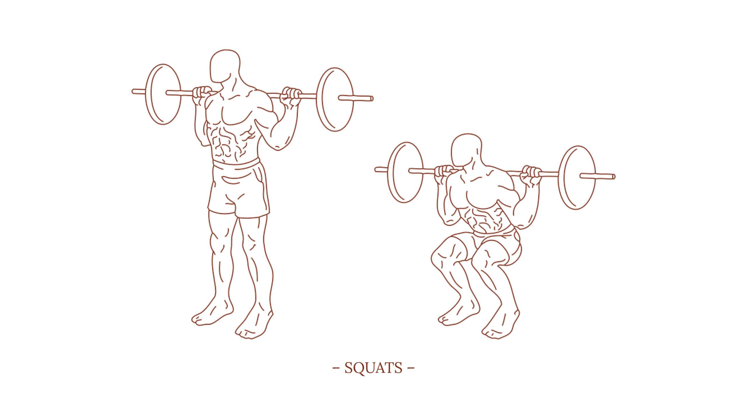 Squats Illustration