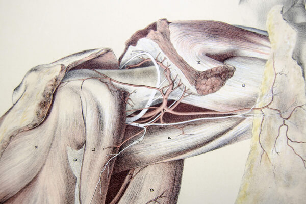 Shoulder joint Page Preview Photo