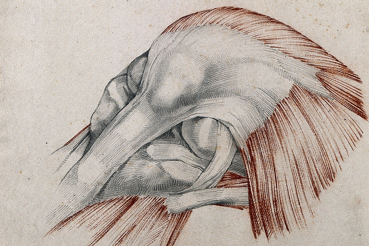 Knee Joint Page Title
