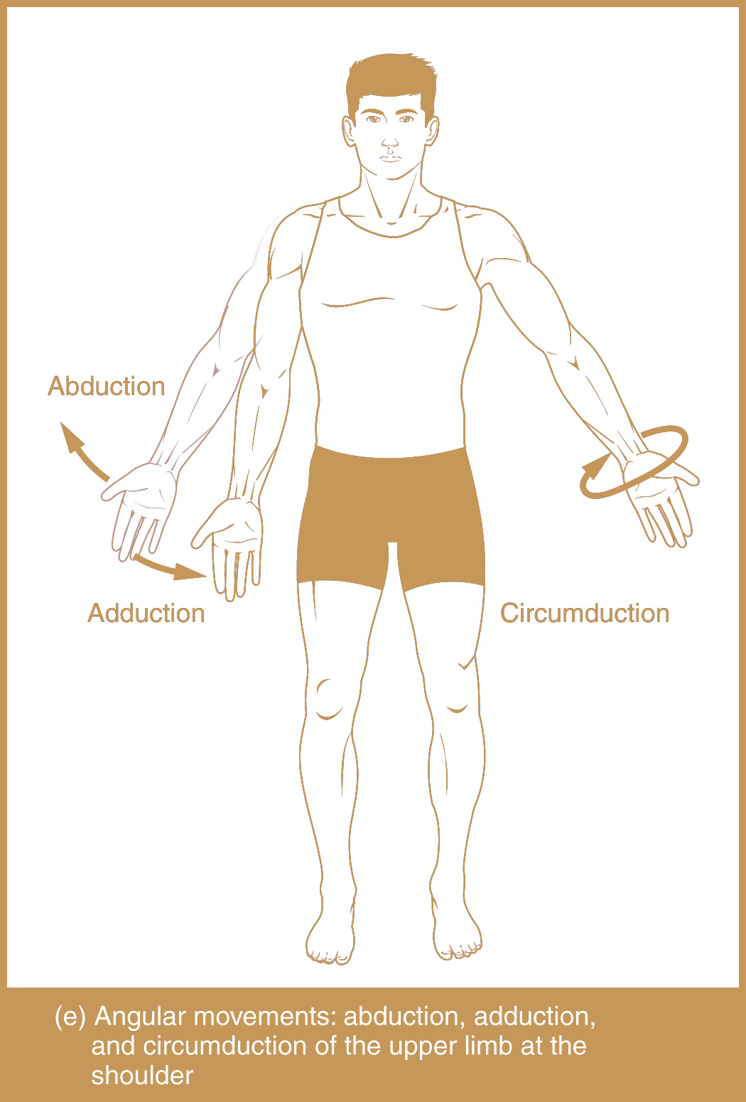 Types of Body Movement - Abduction, Adduction, Circumduction
