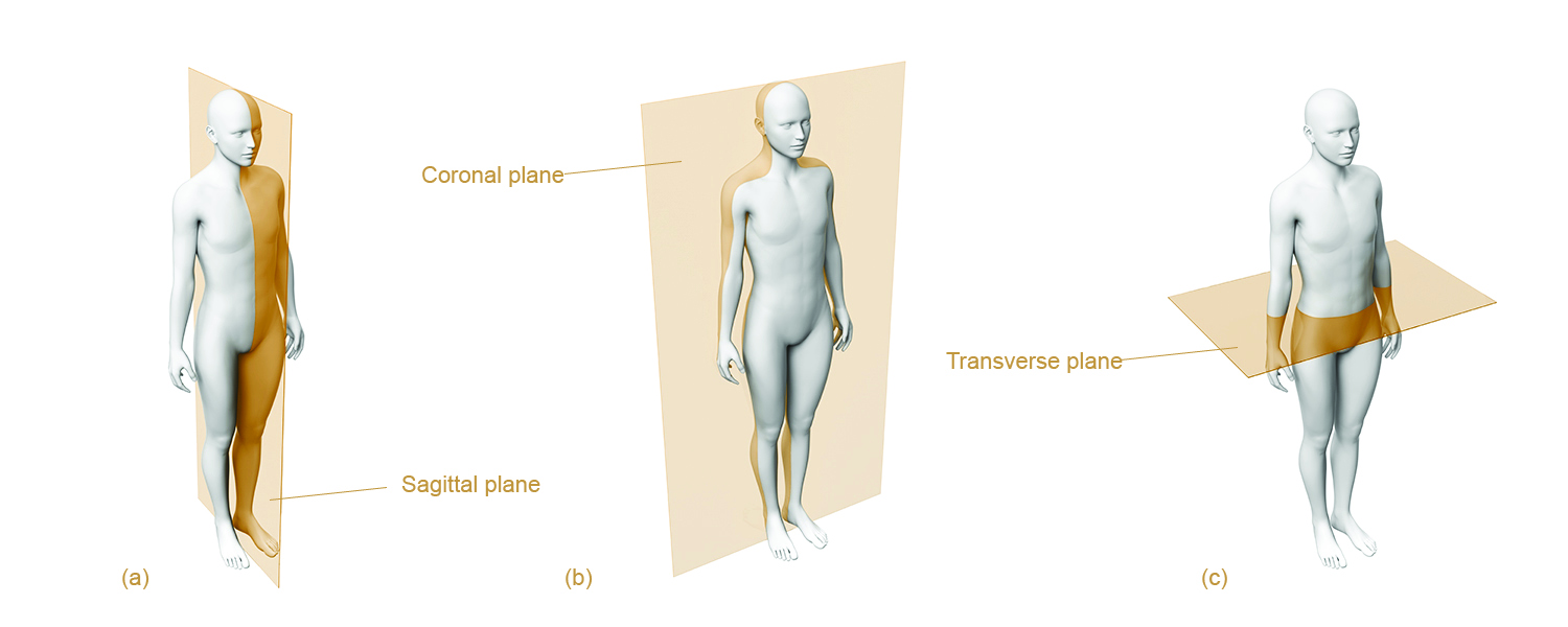 Types of Body Movement - Anatomical Planes