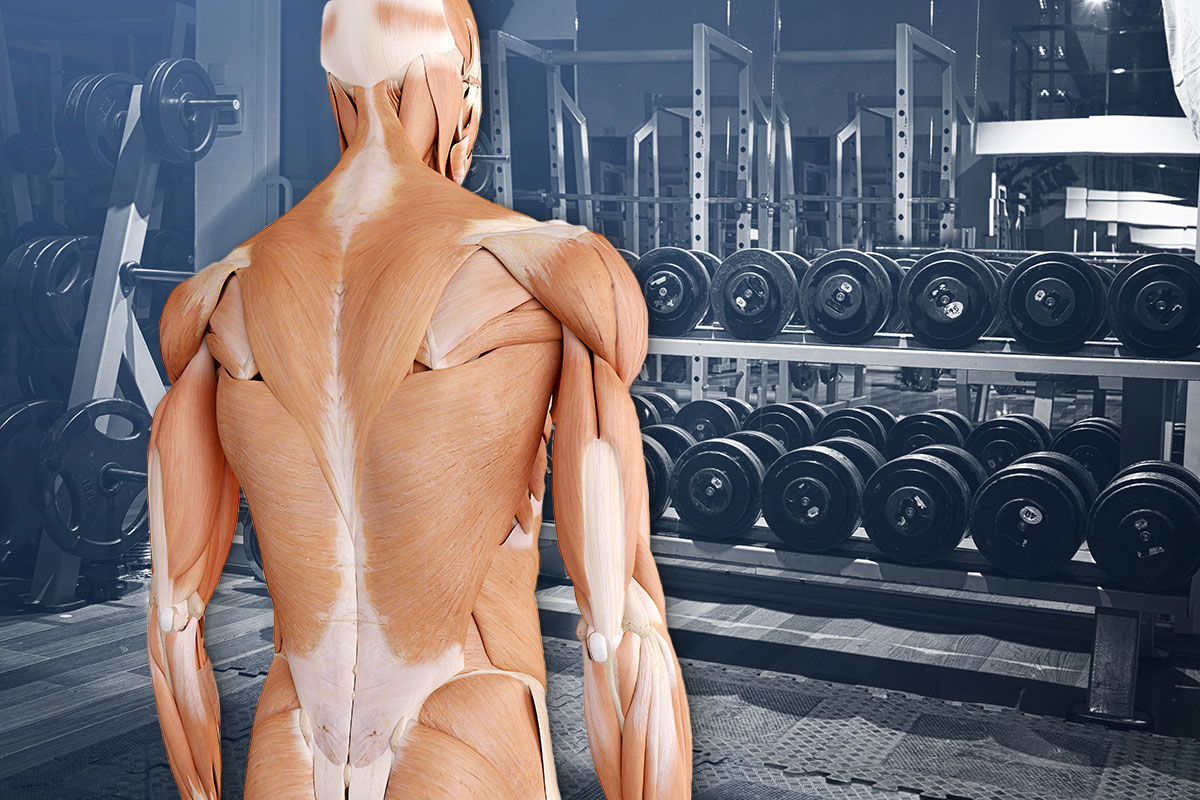 Michael Loehr - Back to the Gym - Page Title Photo